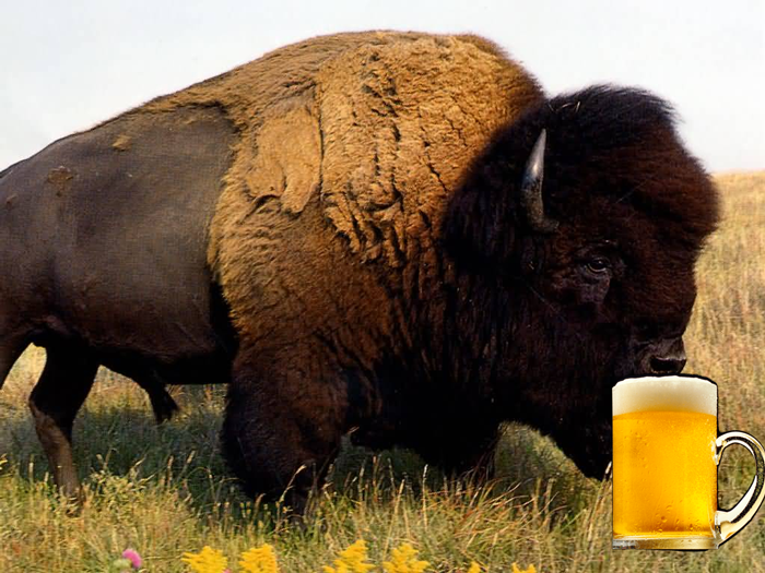 Buffalo club Roma